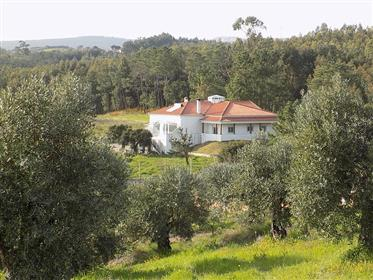 Casa: 385 m²