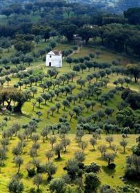 Working farm in the Alentejo District