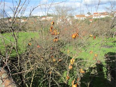 Casa com quintal confronta com Ribeiro