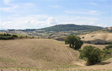 Terra tetto restaurato in vendita in Toscana.