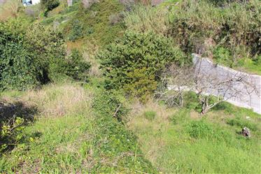 Grundstück: 742 m²