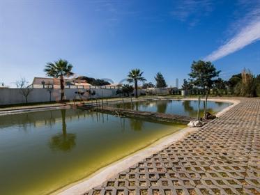 Maravilhosa Quinta a 30 kms Lisboa-Tranquilidade Total