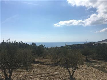 Land close to the sea with nice views!!!!  east Crete