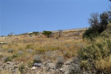 Plot of land of 3000m2 for sale in Ammoudares.