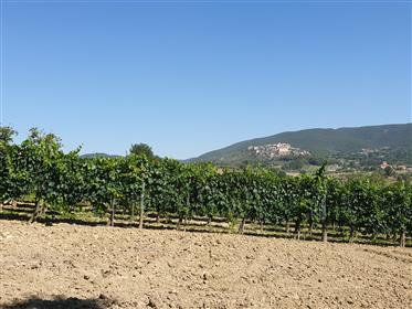 Terreno Panoramico Con Progetto Per Casale .