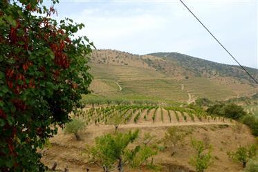 Fazenda de 252 Ha no Douro superior, Guarda, Portugal