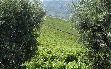 quinta do vinho de 5 ha na régua no Douro, Portugal