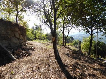 Pequena fazenda e 4 pequenas casas, Marco de Cavaneses, Port...