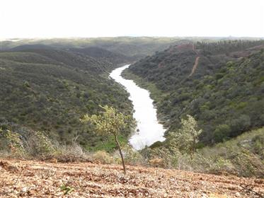 300 hectares land with Hunting, Cork and Eucalyptus in Portugal, Alentejo, Serpa