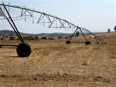 Estate (Farm) 1.100 ha. Portugal, Alentejo, Beja.