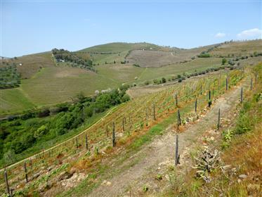Fazenda vinícola de 20ha, puro, Portugal, Santa Marta Penaguiao, Douro
