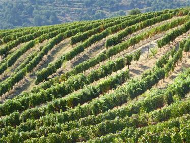 Domaine viticole, Port Wine. Peso da Régua, Vila Real, Douro.
