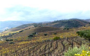 Vignoble de 140.000 m². Portugal, Douro, Vila Real, Murça.