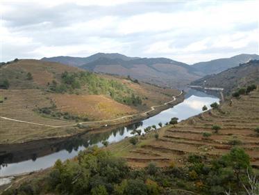Perto de vinho do porto e vinhos Doc. Portugal, Douro, Vila Real.