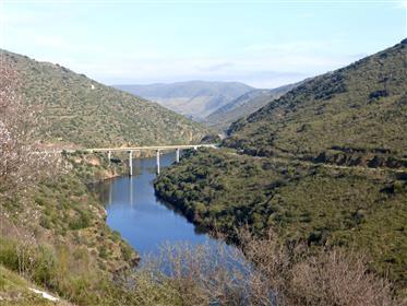 Fazenda, vinha, olival e casa. Portugal, Douro superior, Foz Coa.