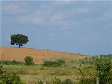 Petite ferme, 2 maisons. Portugal, Trás-os-Montes, Bragança.