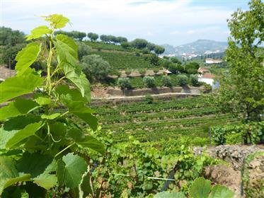 Small vineyard and small house. Portugal, Douro, Lamego.