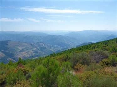 190.000 metros quadrados para plantio de videiras. Portugal, Douro, Sabrosa.