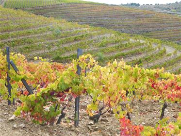 Ferme viticole, 47 hectares de terre. Portugal, Alto Douro, Torre de Moncorvo.