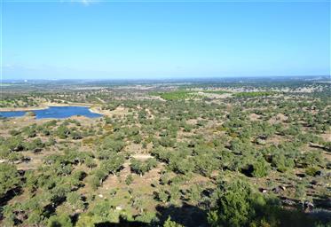 Land: 12,000,000 m²