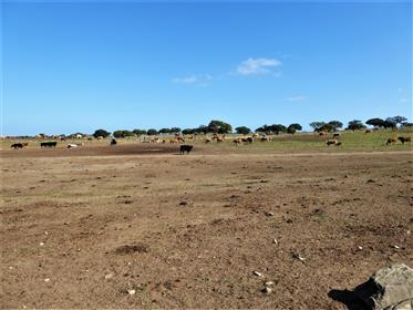 Property 7 000 000 m2, Alentejo. Portugal, Beja, Castro Verde.