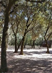 Property on 9Ha of wood - Montélimar
