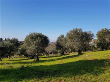 Casolare Panoramico In Pietra In Ostuni