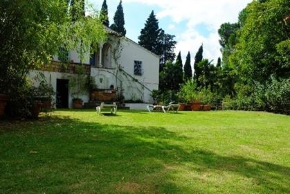 2064  Urbino