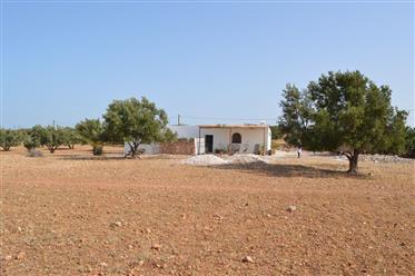 Projet Touristique Maison d hôtes  Terrain 10360 m² 35 Oliviers