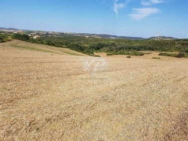 Alenquer/Arruda dos Vinhos. Terreno 161,3 ha com Vista Serra e Campo. Tem viabilidade par
