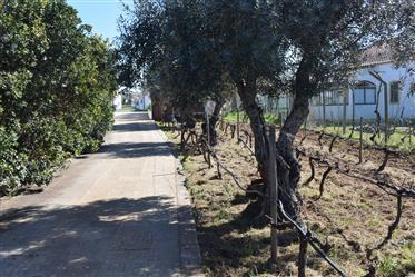 Property for sale in Alentejo Bm017