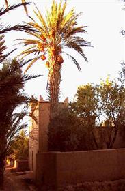 Vend Kasbah dans palmeraie de Skoura