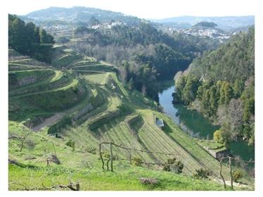 Quinta/Herdade com produção de vinhos premiados Castelo de P...