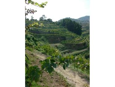 Quinta/Herdade com produção de vinhos premiados Castelo de Paiva › Fornos