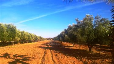 Terrain titré de 2104 m2 avec villa à la palmerais Marrakech