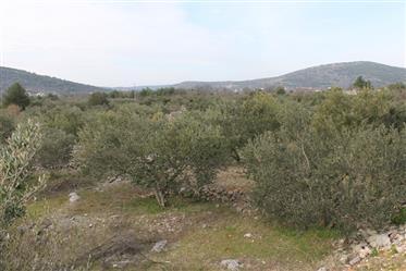 Land: 3,000 m²
