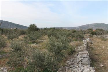 Großes landwirtschaftliches Grundstück in Gustirna