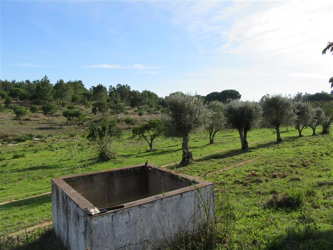 Courela 12, 2 εκτάρια με βαλανιδιά, πεύκο, νερό πηγής, charca, πολλά ηλεκτρικής ενέργειας