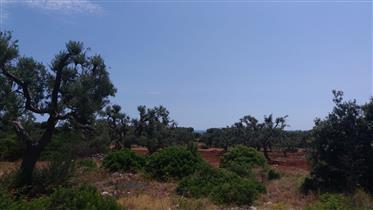 Vendita terreno edificabile - Serranova