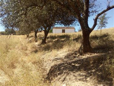 Casa de campo para renovar no Alentejo