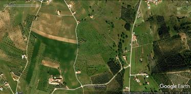 Fazenda perto de Golegã