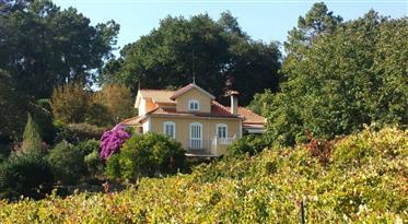 Prachtige Quinta / Finca middenin Portugal