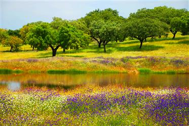 Fairytale boerderij