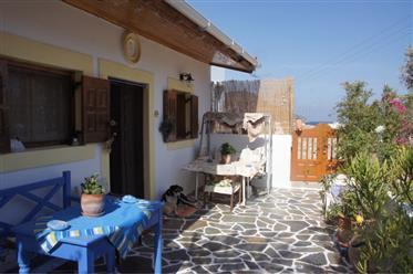 Maison bien entretenue avec un champ d'oliviers en Grèce, l'île de KARPATHOS