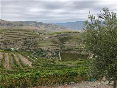 Φάρμα σε κοιλάδα νταούρο (Σάο Τζουάο ντα Pesqueira)