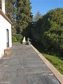 Quinta de 5 hectares em Abrantes