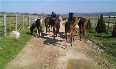 Pferdesportimobilie zu verkaufen