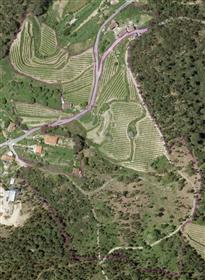 Quinta com 4 Habitações e área de Vinha e Florestal