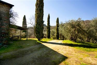 Favorit i Toscana