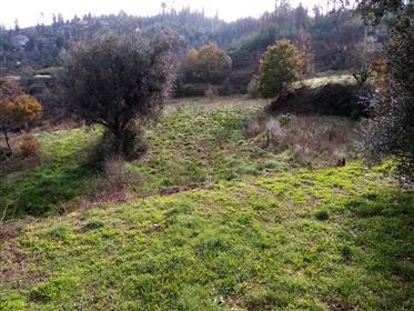 Quinta, 4,8 Hektar mit Haupthaus, Gästehaus, Scheune und 2 Ruinen